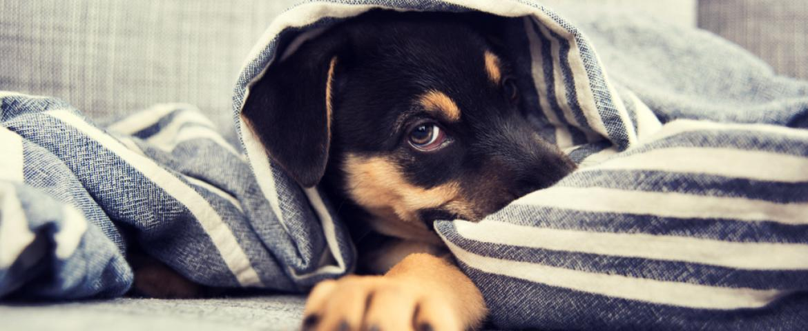 watch those paws: how to care for your dog's feet