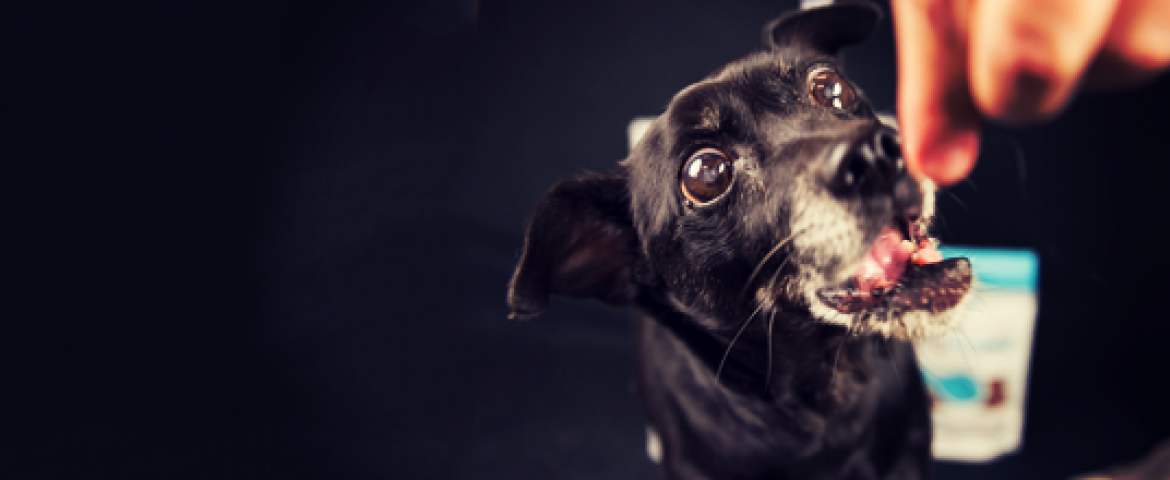 Meet some the Friends of the Palm Springs Animal Shelter dogs!