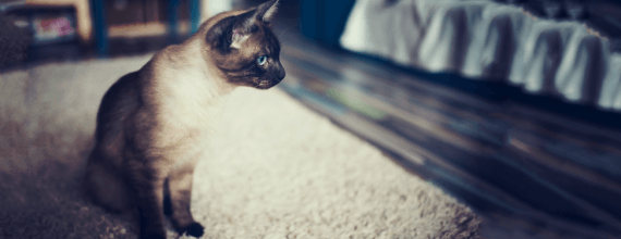 watch those paws: how to care for your cat's feet