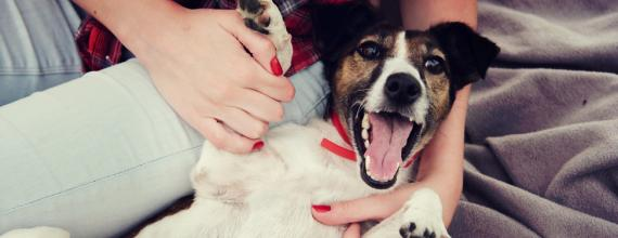 grumbly tummies: how to help your dog deal with stomach upset