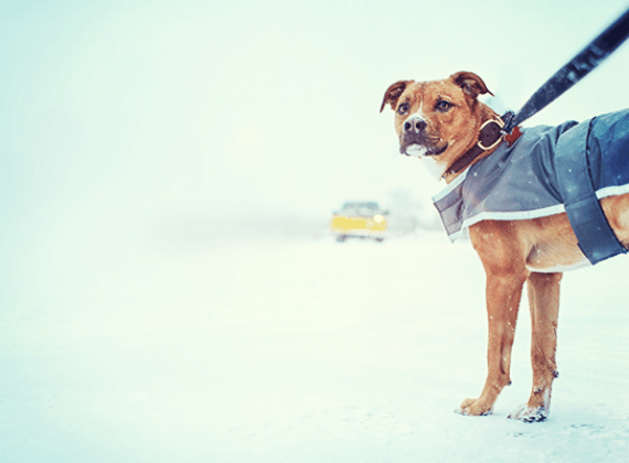 Helping your dog deal with dropping temperatures